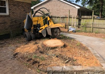 Landscape tree stump grinding project