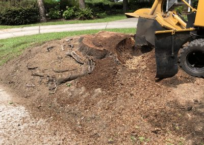 Stump removal services started
