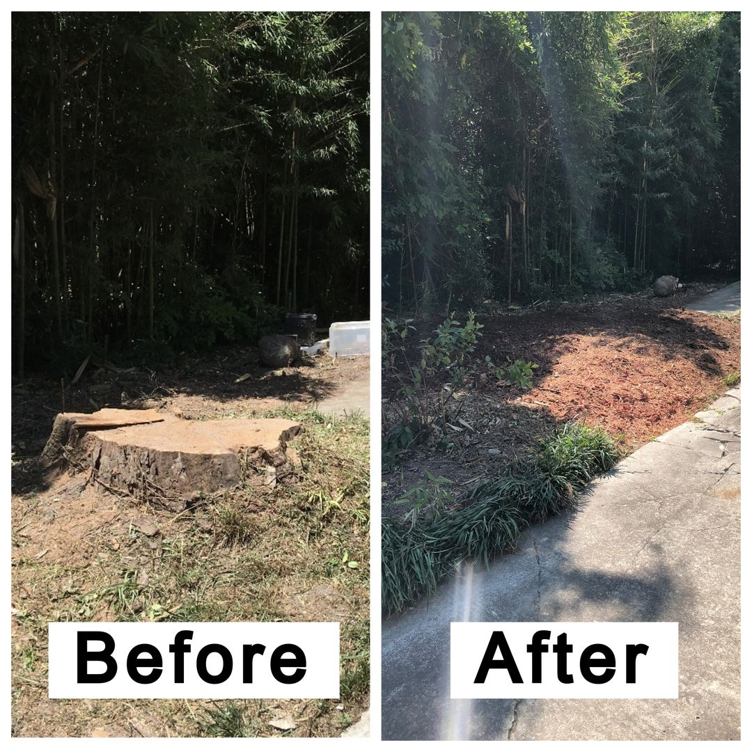 Coastal Stump Grinding LLC - Before & After 6