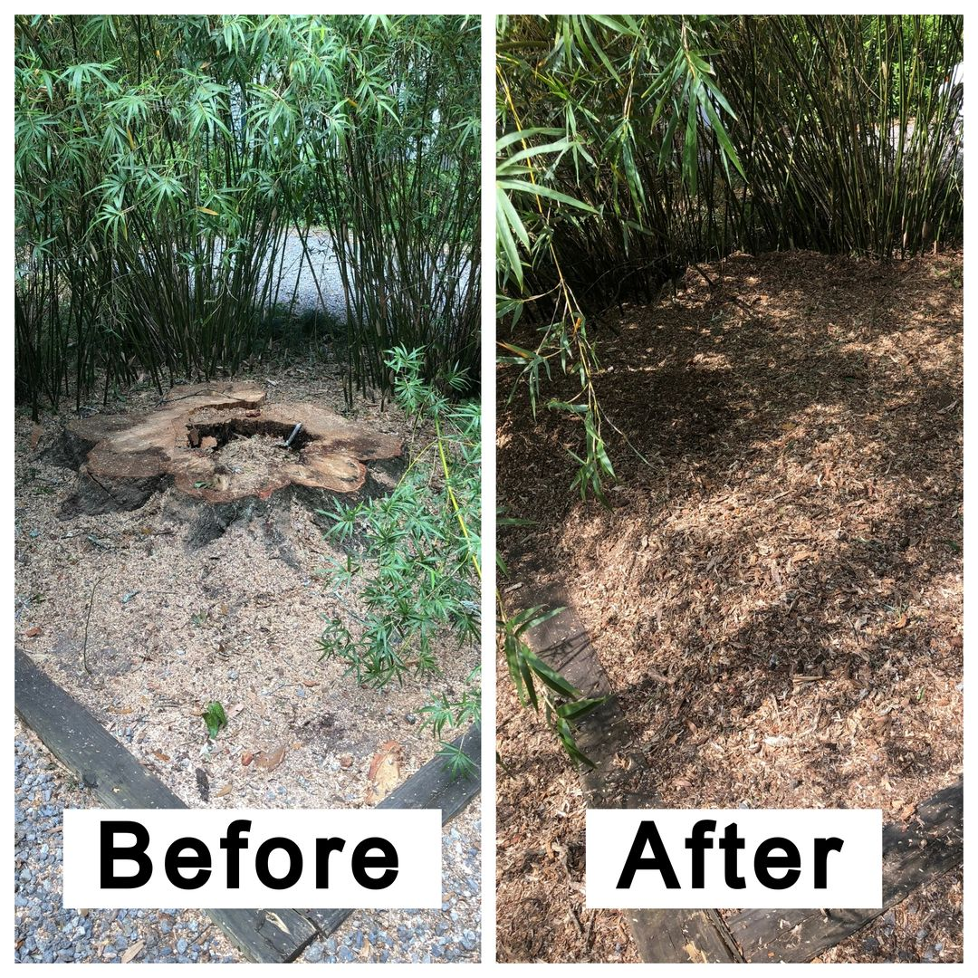 Coastal Stump Grinding LLC - Before & After 1